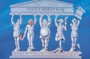 inflammation_cartoon