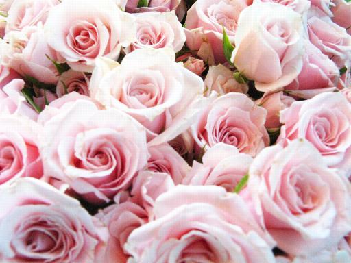 _wsb_512x384_flower1